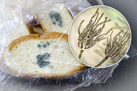 Mouldy bread and close-up view of Penicillium fungi, the causative agent of bread mould, photo and 3D illustration 写真素材 - 119167751