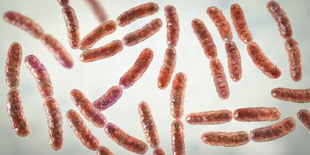 Bacteria Lactobacillus, 3D illustration. Normal flora of small intestine, lactic acid bacteria. Probiotic bacterium Imagens