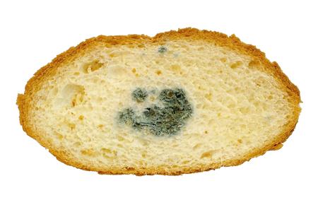 Mouldy bread, Penicillium fungal mold inside bread