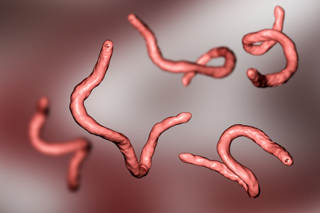 Parasitic hookworm Ancylosoma, 3D illustration. Ancylostoma duodenale can infect humans, dogs and cats, its head has several tooth-like structures Banco de Imagens