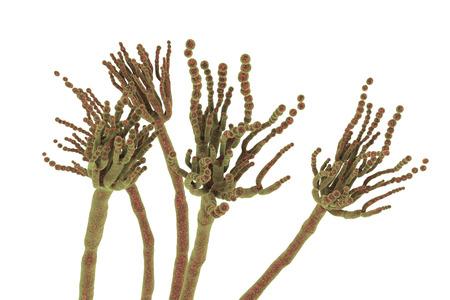 Fungi Penicillium roqueforti, a fungus used in the production of blue cheeses, 3D illustration