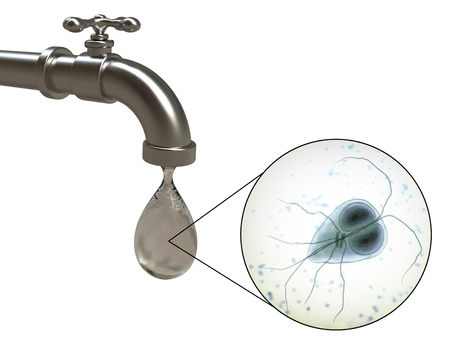 Safety of drinking water concept, 3D illustration showing Giardia intestinalis protozoan, the causative agent of giardiasis and diarrhea, contaminating drinking water