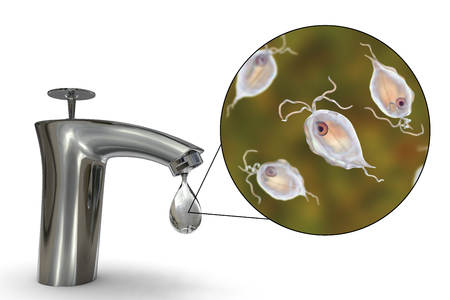 Safety of drinking water concept, 3D illustration showing Pentatrichomonas hominis protozoan in water. Also known as Trichomonas hominis or T. intestinalis, may cause diarrhea Banco de Imagens