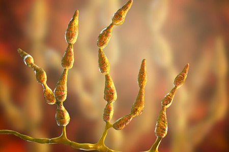 Mold Alternaria alternata, allergic fungus, 3D illustration. Alternaria is the causative agent of plant diseases, is common indoor mold and causes allergy, asthma, onychomycosis, sinusitis