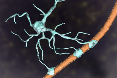 Astrocyte and blood vessel, 3D illustration. Astrocytes, brain glial cells, also known as astroglia, connect neuronal cells to blood vessels Stock Illustration - 123657877