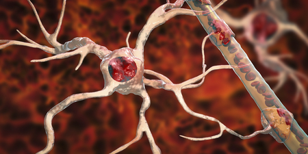 Astrocyte and blood vessel, 3D illustration. Astrocytes, brain glial cells, also known as astroglia, connect neuronal cells to blood vessels Stock Illustration - 123657886