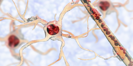 Astrocyte and blood vessel, 3D illustration. Astrocytes, brain glial cells, also known as astroglia, connect neuronal cells to blood vessels Stock Illustration - 123657895
