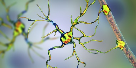 Astrocyte and blood vessel, 3D illustration. Astrocytes, brain glial cells, also known as astroglia, connect neuronal cells to blood vessels Stock Illustration - 123754179