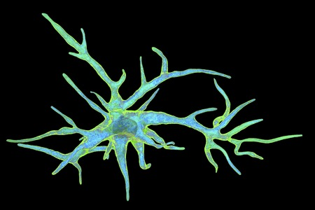 Astrocyte, a brain glial cell, 3D illustration. Astrocytes, also known as astroglia, connect neuronal cells to blood vessels, play role in immune responce against Toxoplasma gondii Stock Photo