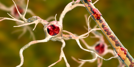 Astrocyte and blood vessel, 3D illustration. Astrocytes, brain glial cells, also known as astroglia, connect neuronal cells to blood vessels Stock Illustration - 123754197
