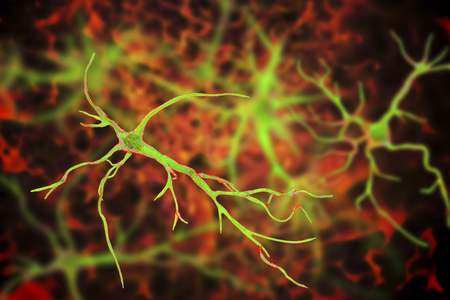 Astrocytes, brain glial cells, 3D illustration. Astrocytes, also known as astroglia, connect neuronal cells to blood vessels, play role in immune responce against Toxoplasma gondii Stock fotó