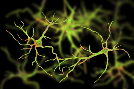 Astrocytes, brain glial cells, 3D illustration. Astrocytes, also known as astroglia, connect neuronal cells to blood vessels, play role in immune responce against Toxoplasma gondii Stock Photo