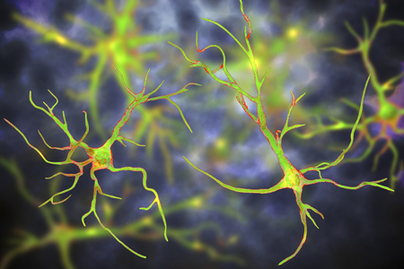 Astrocytes, brain glial cells, 3D illustration. Astrocytes, also known as astroglia, connect neuronal cells to blood vessels, play role in immune responce against Toxoplasma gondii Stock Illustration - 123760022