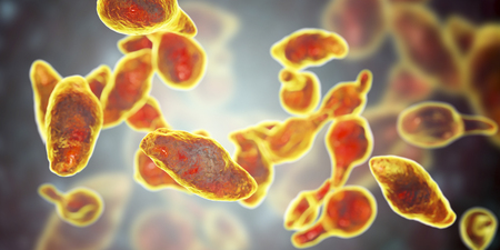 Bacteria Mycoplasma genitalium, 3D illustration. The causative agent of sexually transmitted infections and infertility
