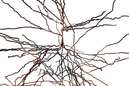 Pyramidal neuron, human brain cell, 3D illustration. Human nervous system Stock Photo