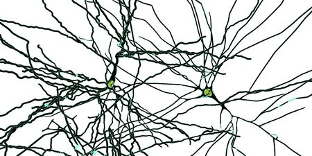 Pyramidal neurons, human brain cells, 3D illustration. Human nervous system Stock Photo
