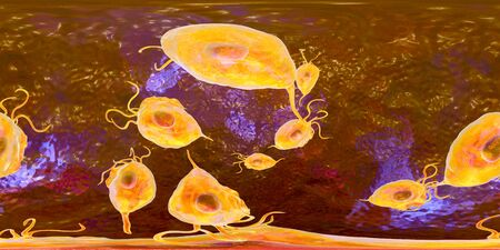 Trichomonas vaginalis protozoan, 360-degree spherical panorama view, 3D illustration. A parasite that causes trichomoniasis, sexually transmitted infection in men and women 스톡 콘텐츠 - 124928545