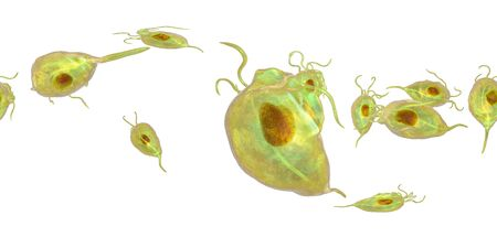 Trichomonas vaginalis protozoan, 360-degree spherical panorama view, 3D illustration. A parasite that causes trichomoniasis, sexually transmitted infection in men and women 스톡 콘텐츠 - 124928551