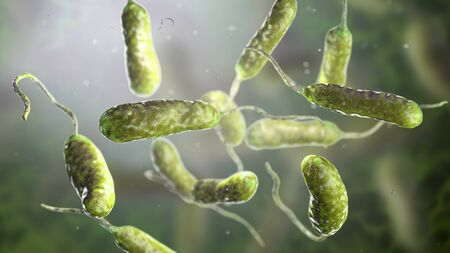 Bacterium Vibrio vulnificus, 3D illustration. The causative agent of serious seafood-related infections and infected wound after swimming in warm sea water