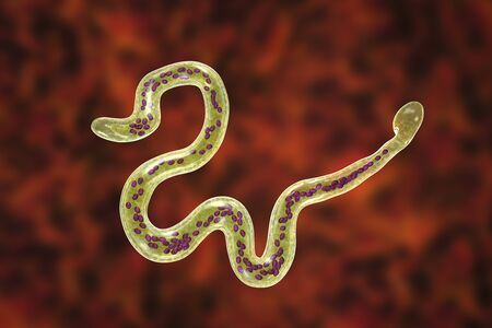 Brugia malayi, a roundworm nematode, one of the causative agents of lymphatic filariasis, 3D illustration showing presence of sheath around the worm and two non-continous nuclei in the tail tip Фото со стока