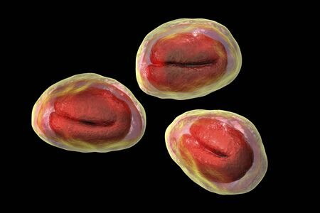 Eggs of helminths Enterobius vermicularis containing worm larva. Threadworm which cause enterobiasis, 3D illustration