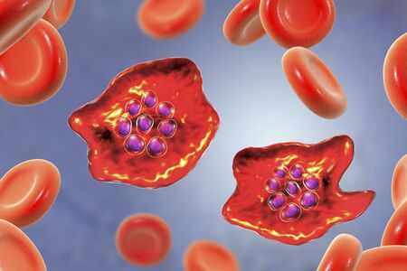 The malaria-infected red blood cell. 3D illustration showing malaria parasite Plasmodium ovale in the stage of schizont