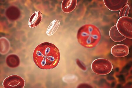 Babesia parasites inside red blood cell, the causative agent of babesiosis. 3D illustration showing classic tetrad-forms of Babesia merozoites so-called Maltese cross formation