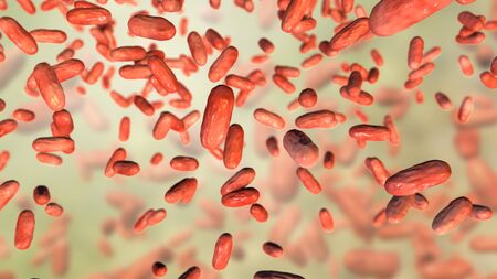 Bacteria Bordetella parapertussis, the causative agent of whooping cough-like disease, 3D illustration