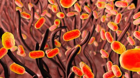 Whooping cough bacteria Bordetella pertussis in respiratory tract, 3D illustration showing cilia of respiratory epithelium and bacteria