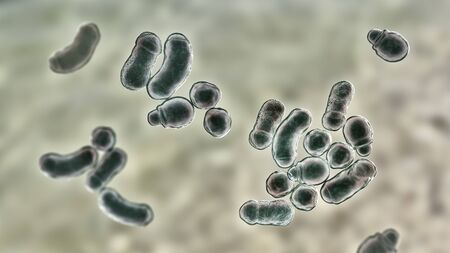 Microscopic fungi Malassezia furfur, 3D illustration. They are naturally found on the skin surfaces and are also associated with dandruff, seborrhoeic dermatitis and tinea versicolor