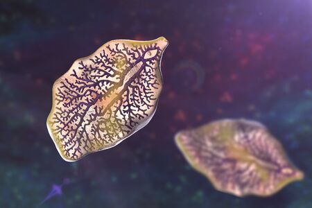Fasciola hepatica, or liver fluke, 3D illustration. A parasitic trematode worm that causes fasciolosis, an infection of liver Фото со стока