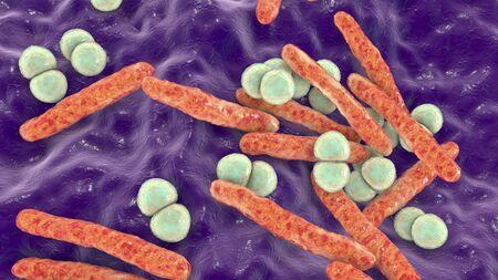 Respiratory pathogens, bacteria Mycobacterium tuberculosis and Streptococcus pneumoniae
