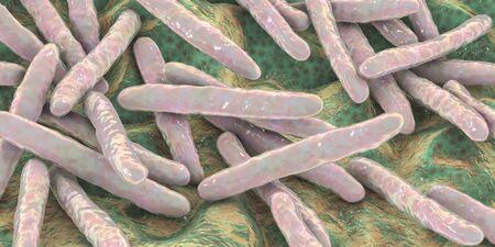 Bacteria Mycobacterium tuberculosis Foto de archivo