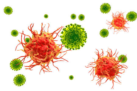 Dendritic cells binding viruses Stock Photo