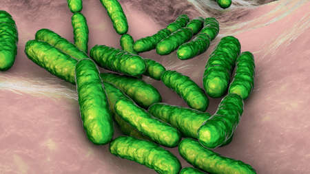 Probiotic bacteria Lactobacillus, 3D illustration. L. acidophilus, L. helveticus and other. Normal flora of intestine. Lactic acid bacterium