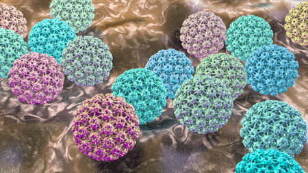 Human papillomavirus, a virus which causes warts located mainly on hands and feet, some strains infect genitals and can cause cervical cancer, 3D illustration