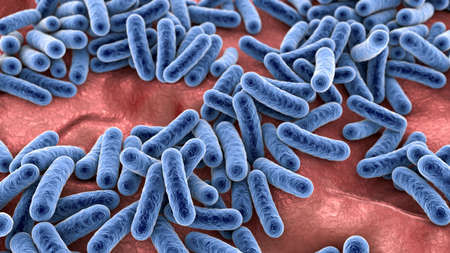 Bacteria, human microbiome, normal microflora of human body, 3D illustration Imagens