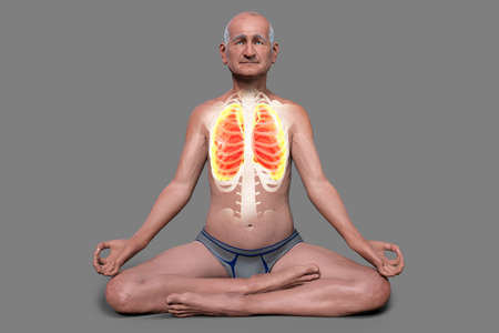 A senior man in Lotus yoga position, or Padmasana, with highlighted lungs, 3D illustration. Respiratory exercises and meditation for recovery and prevention of COVID-19