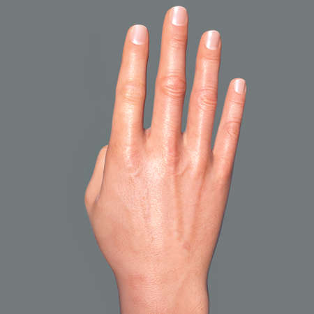 British, Australian and New Zealand Sign Language (BANZSL) sign number 4, 3D illustration