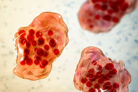 Measles disease, giant multinucleated cells seen during microscopy of biopsy specimens, known as Warthin-Finkeldey giant cells, 3D illustration. Also found in HIV-infected patients, in Kimura disease