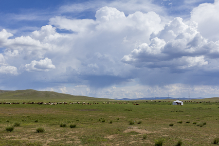 cattle, horses and ger in mongolian steppe at Mongolia