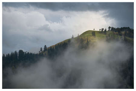 Autumn season, wild forest in the misty fog and clouds