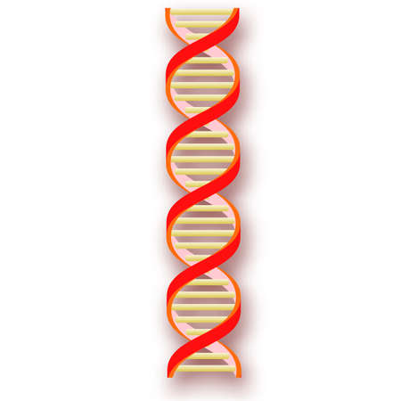nucleotide: Dna strands.