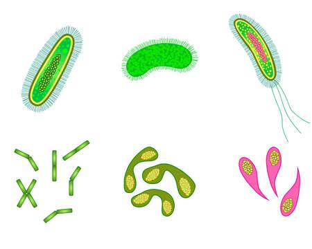 bacterias: las bacterias y los virus de las células aisladas.