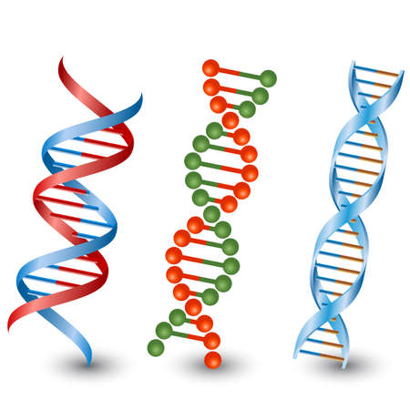 dna structure: Seamless DNA strands.