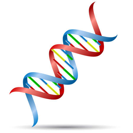 DNA の螺旋形。  イラスト・ベクター素材