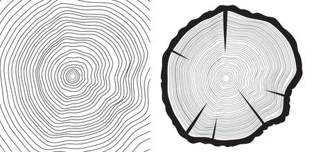 rings on a tree: Vector sawcut tree trunk and tree-rings background