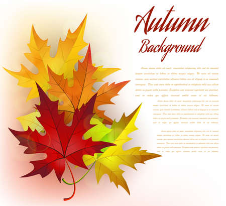 branches and leaves: Autumn Frame With Leaves on White Background. Elegant Design with Text Space . Vector Illustration.