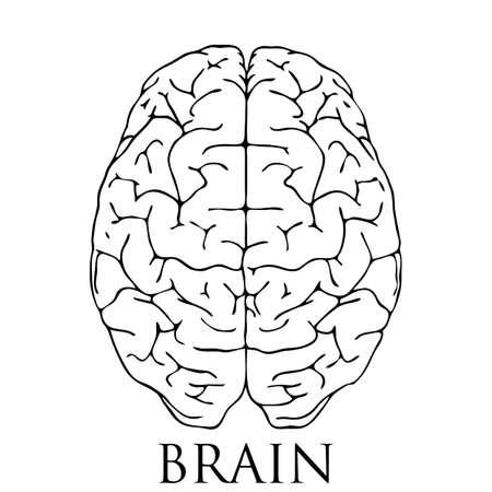 minimal style: Minimal style Brain Icon Illustration with Creative Business Concept Verctor