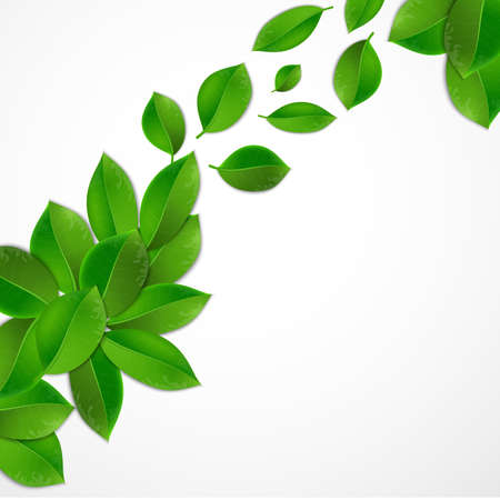 greenness: green leaves on a white background, Vector illustration of ecology concept